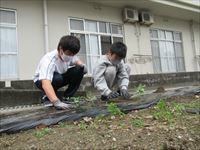 2人で苗植えをしている様子
